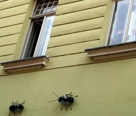 remedios hormigas casa