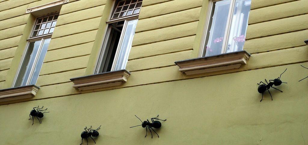 Plaga de hormigas c mo eliminar hormigas en casa - Como eliminar ratas en casa ...