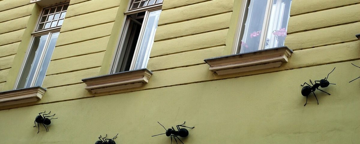 remedios-hormigas-casa
