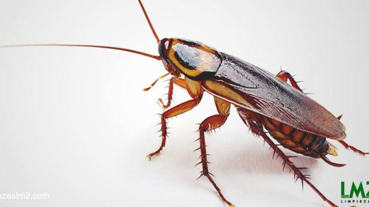 Cómo Eliminar Cucarachas Venenos Para Matar Cucarachas