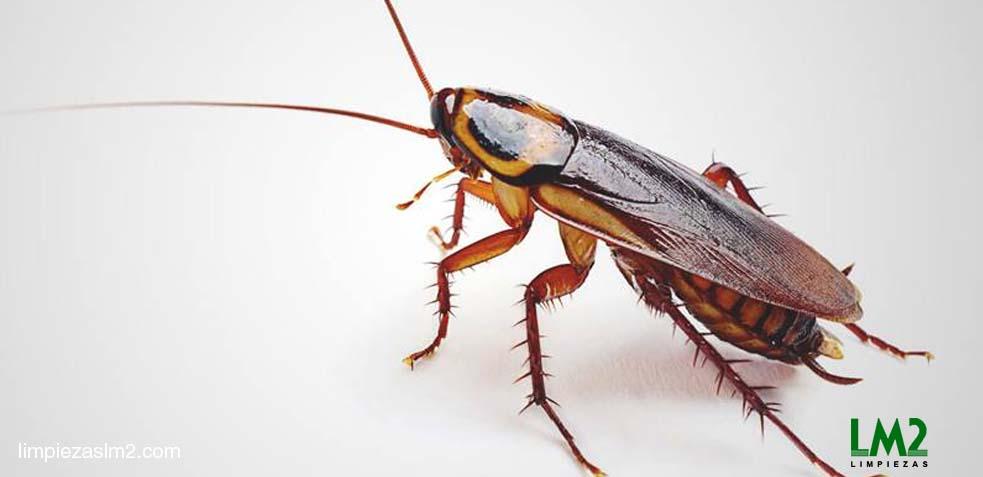 cómo acabar con una plaga de cucarachas