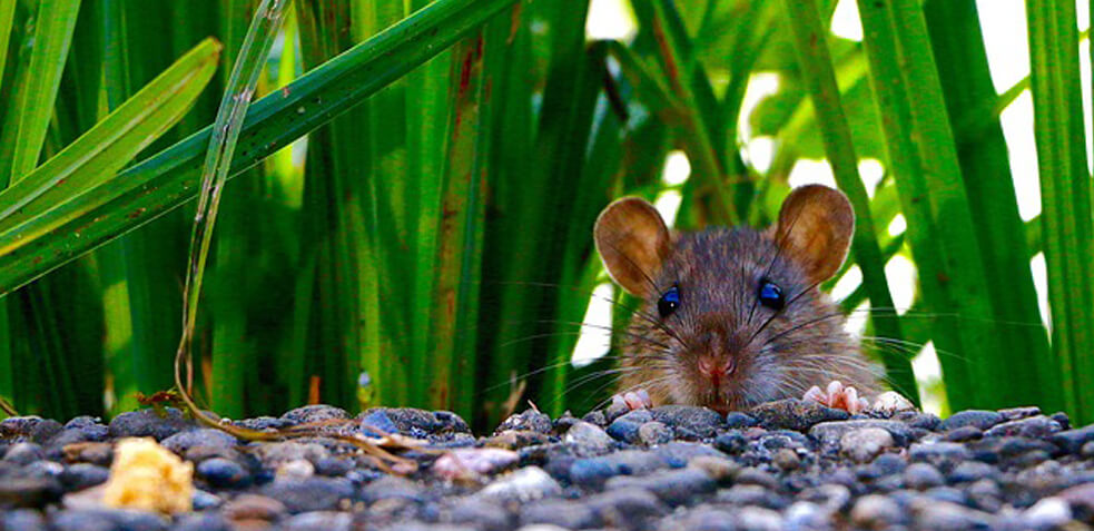 MATARRATAS matar ratas