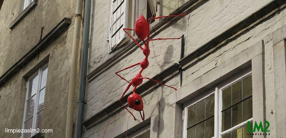 Plaga de hormigas c mo eliminar hormigas en casa - Casa de hormigas ...