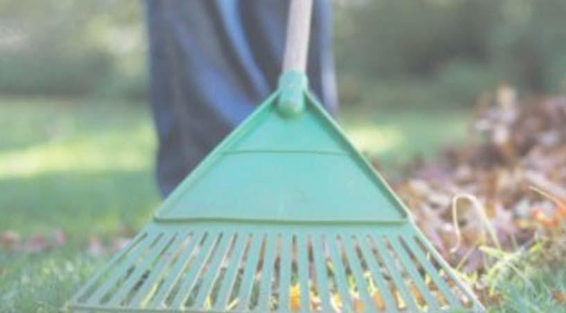 limpieza-profunda-de-jardines
