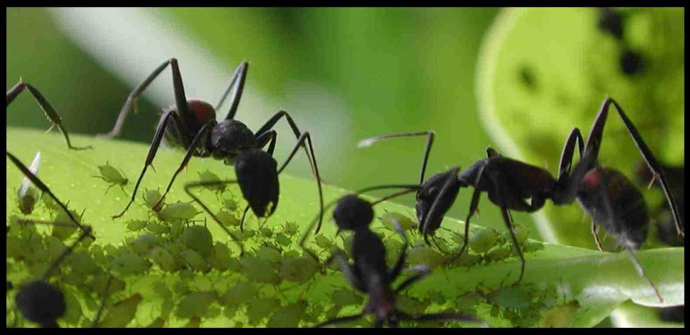 Plaga de hormigas c mo eliminar hormigas en casa for Como eliminar plaga de hormigas