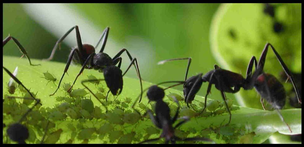 Como exterminar las hormigas fabulous mezcle en un bol - Exterminar hormigas en casa ...